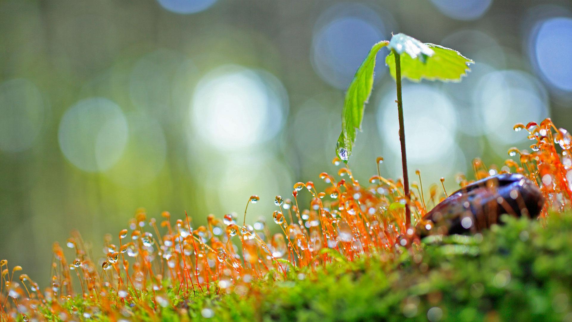 Piante del Vivaio Verde Ambiente Orosei