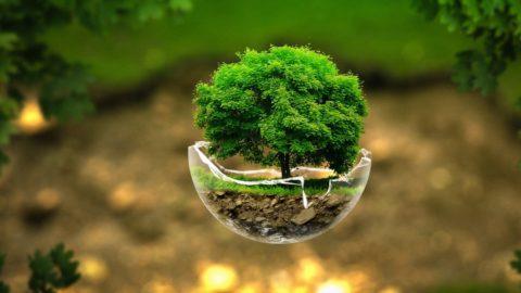 Trapianto piante esemplari