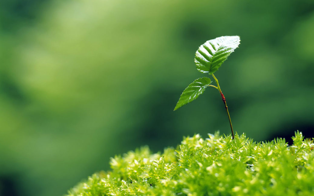 trattamento fitosanitario